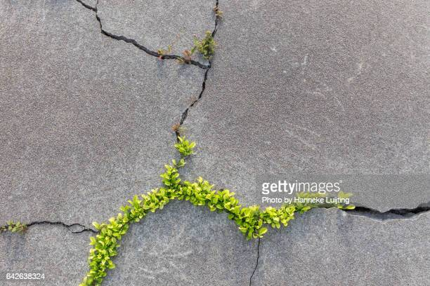 cracks - american influenced stock photos and pictures
