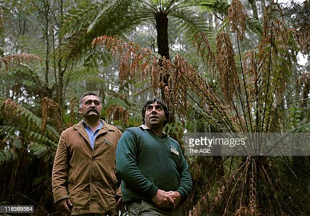 Craig Bray [left] Chief Ranger in the Dandenong Ranges National Park with fellow indigenous ranger Barry Coombes among the ferns in Sherbrook For a...
