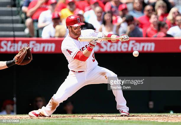 Craig Gentry of the Los Angeles Angels of Anaheim bunts against the Texas Rangers at Angel Stadium of Anaheim on April 10 2016 in Anaheim California...