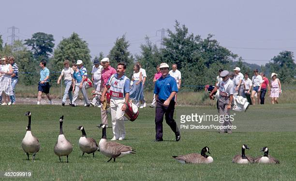 Craig Parry of Australia and Kevin Dickens of Great Britain with their caddies walk through a flock of geese during the English Open Golf Tournament...