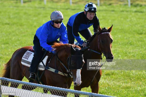 Craig Williams riding Admire Deus gallops alongside Steel of Madrid during a trackwork session at Werribee Racecourse on October 3 2017 in Melbourne...