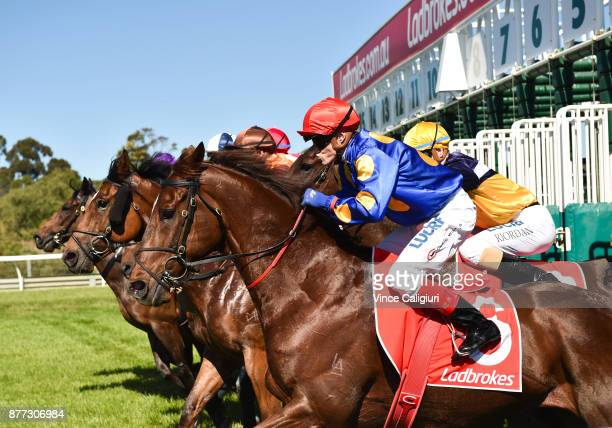 Craig Williams riding Search Squad jumps out of barriers before unplaced finish in Race 7 during Melbourne Racing at Sandown Lakeside on November 22...