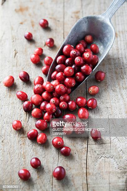 cranberries - cranberry stock pictures, royalty-free photos & images