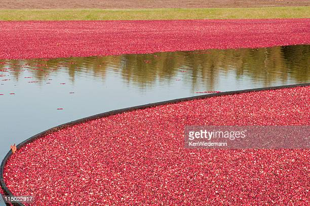 cranberry colors - plymouth massachusetts stock photos and pictures