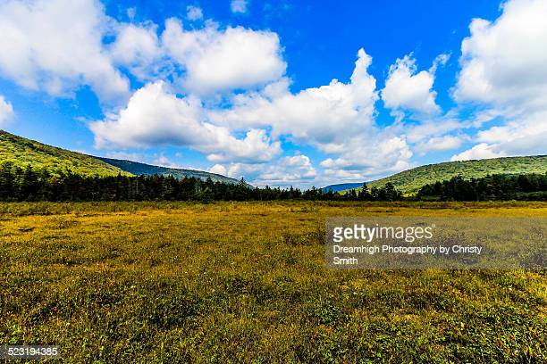 cranberry glades botanical area - monongahela national forest stock photos and pictures