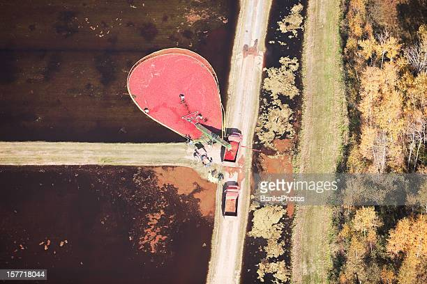 cranberry harvest aerial view - cranberry harvest stock pictures, royalty-free photos & images