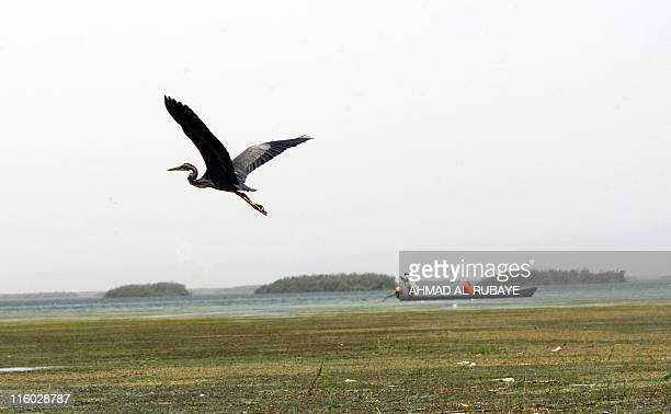 A crane flies past an Iraqi fisherman and his wife sit in their dugout on the alHuwaiza marshes northern Amara 420 km south of Baghdad on June 13...