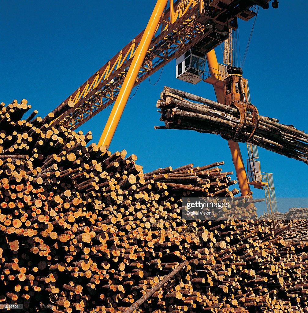 Crane lifting cut timber : Stock Photo
