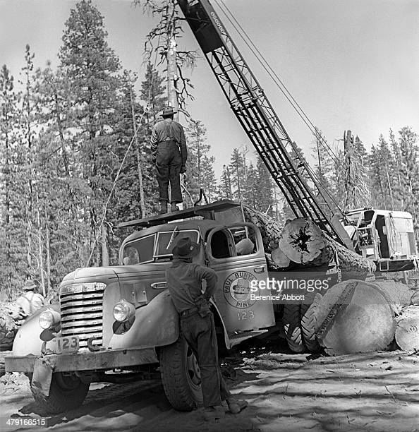 Crane loading Paul Bunyan pine truck United States circa 1950 Abbott took two series of logging photographs the first in the High Sierra Mountains in...
