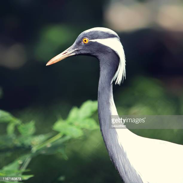 crane - becco foto e immagini stock