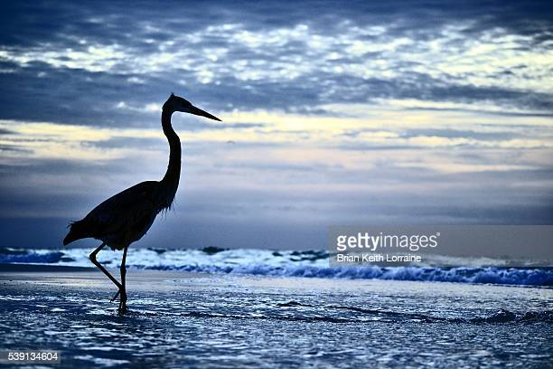 crane - pensacola beach stock pictures, royalty-free photos & images