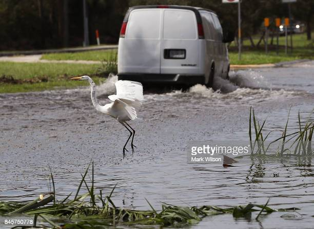 A crane prepares to land on a road flooded by Hurricane Irma on September 11 2017 in Estero Florida Hurricane Irma made landfall in the Florida Keys...
