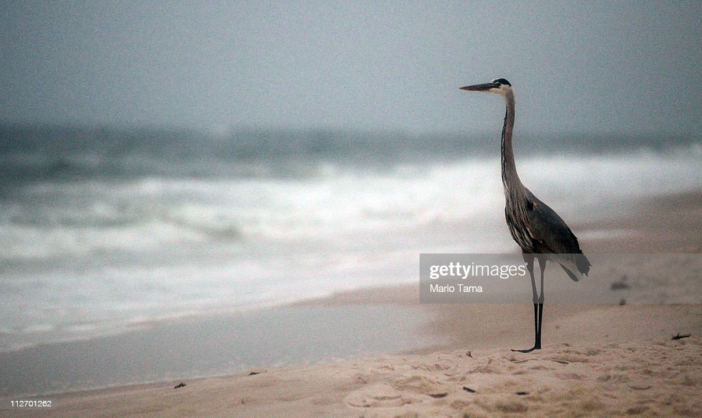 The Gulf Coast Commemorates One-Year Anniversary Of BP Oil Spill : News Photo