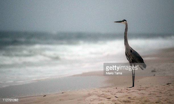 A crane stands on the beach at dawn on the oneyear anniversary of the BP oil spill on April 20 2011 in Orange Beach Alabama Orange Beach on the Gulf...