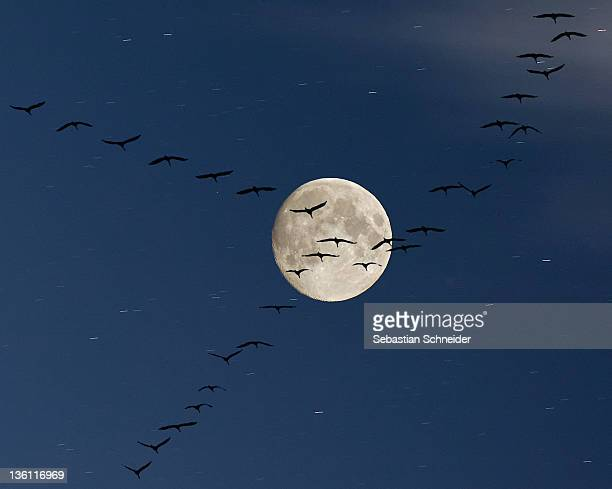 Cranes flying to moon