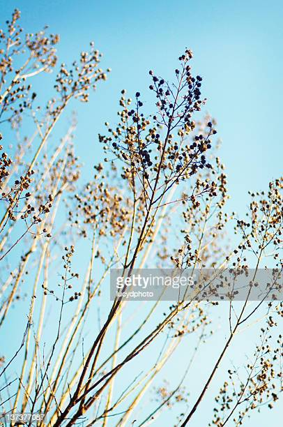 crape myrtle trees - crepe myrtle tree stock pictures, royalty-free photos & images