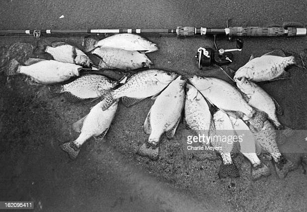 JUN 28 1977 JUN 30 1977 Crappie which came to dinner Cherry Creek fish aren't large but provide consistent sport and excellent fare for the table