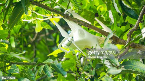 Crashed Drone After Accident Hanging on Tree
