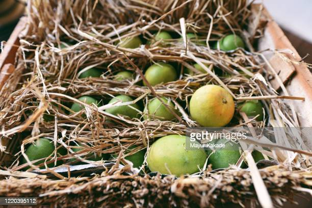 crate of alphonso mangoes picture