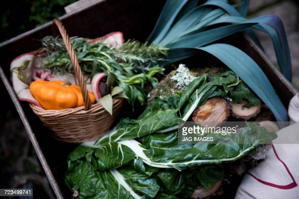 Crate of freshly picked spring greens and squash vegetable in garden