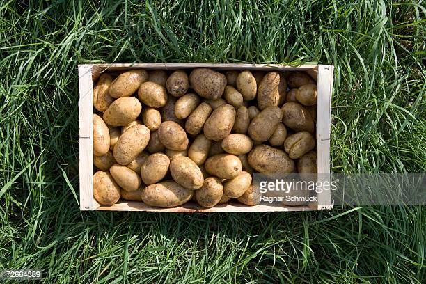 Crate of potatoes on grass