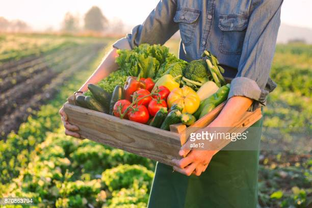 Crate of raw vegetables