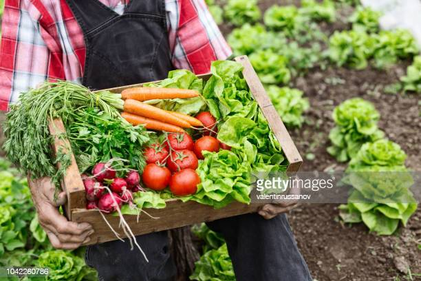 crate with vegetables - box container stock pictures, royalty-free photos & images