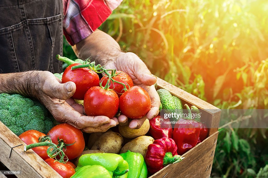 Crate with vegetables : Stock Photo