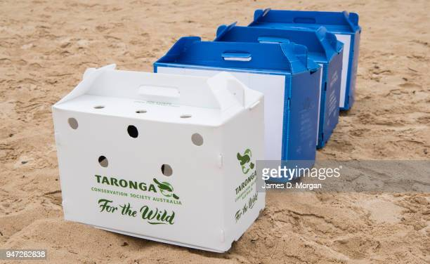 Crates containing the Little Penguins before release at Shelly Beach on April 17 2018 in Sydney Australia The five Little Penguins were released by...