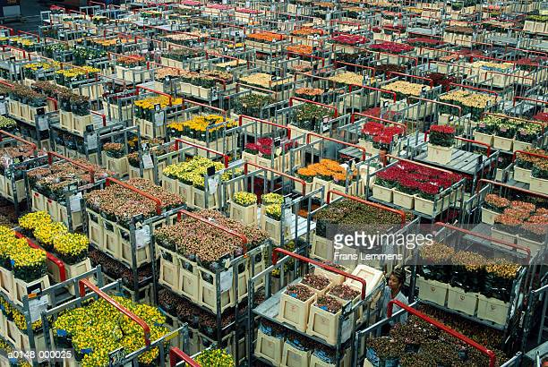 crates of flowers at auction - auction stock pictures, royalty-free photos & images