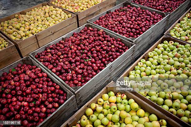 Crates of fresh apples await sorting and packaging at Jack Brown Produce Inc in Sparta Michigan US on Thursday Sept 27 2012 John Schaefer president...