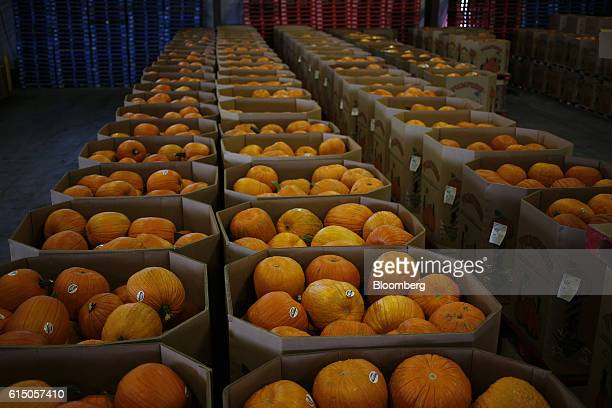 Crates of newlyharvested jacko'lantern pumpkins sit inside a Frey Farms Inc processing facility Poseyville Indiana US on Thursday Oct 13 2016 Frey...