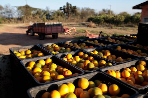 BRA: BrazilFrostMay Crimp Orange-Juice Industry Margins