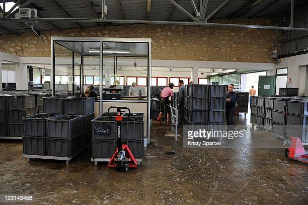 Crates of Pinot grapes are seen at the Nicolas Feuillatte champagne processing facility on August 31 2011 in Epernay France