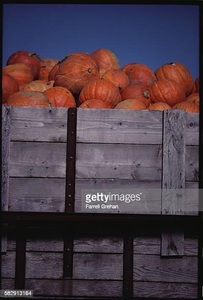 Crates of Pumpkins