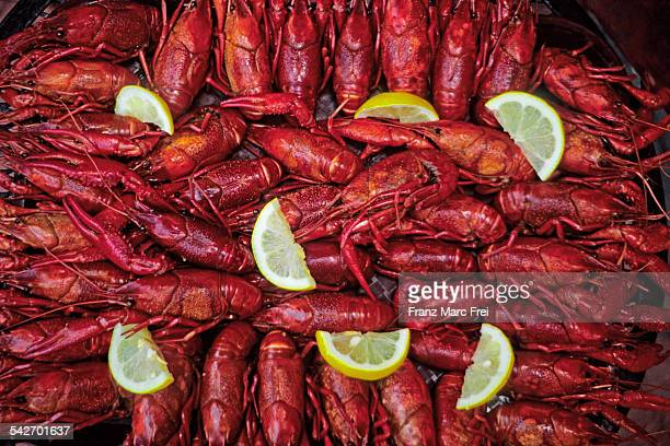 Crawfish Cookout, New Orleans, Louisiana
