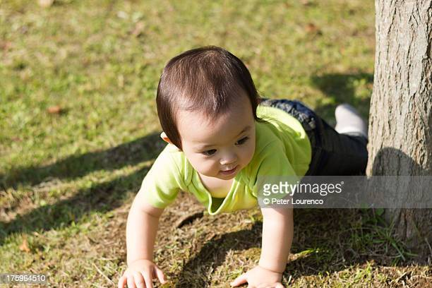 crawling around the tree - peter lourenco stock pictures, royalty-free photos & images