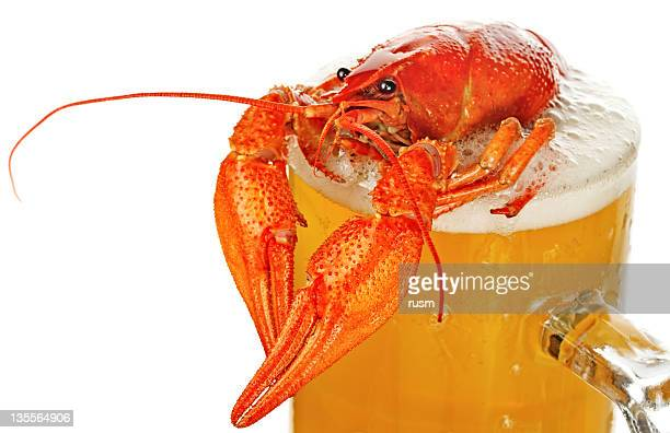 crayfish and beer isolated on white background - crayfish seafood stock pictures, royalty-free photos & images