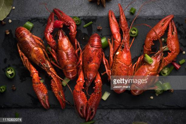 crayfish - homard photos et images de collection