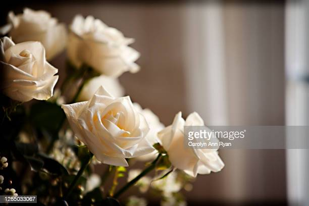 cream colored roses - memorial event stock pictures, royalty-free photos & images