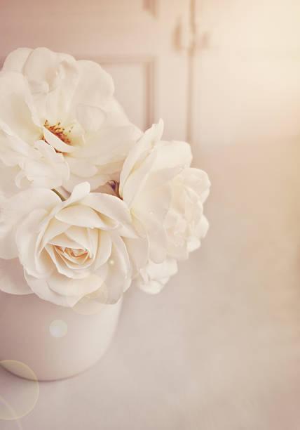 Cream roses in vase