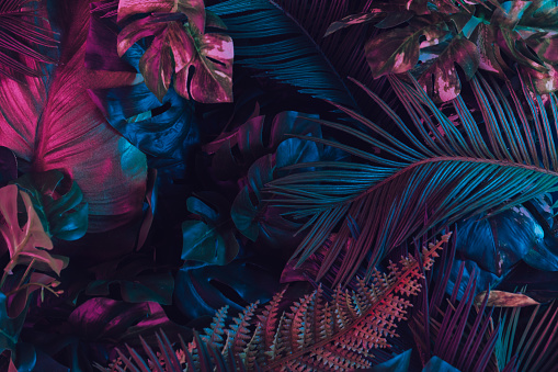 Creative fluorescent color layout made of tropical leaves. 1132025272