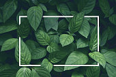 https://www.istockphoto.com/photo/creative-layout-green-leaves-with-white-square-frame-flat-lay-for-advertising-card-or-gm922764488-253307606