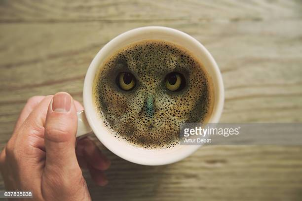 Creative picture of a double exposure view with owl animal merged inside coffee cup surface in the morning taken from personal perspective, mixing wild animal inside coffee.