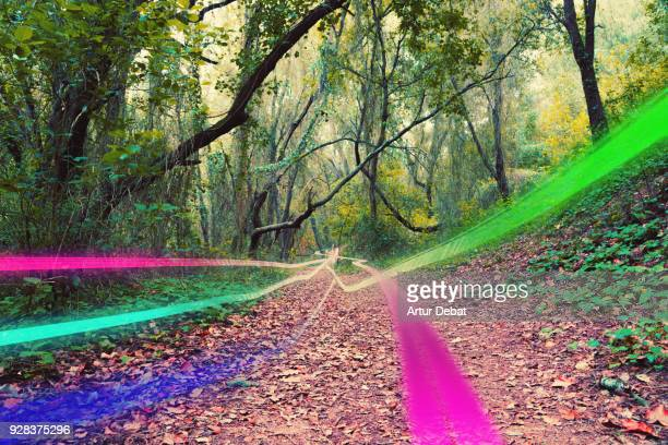 Creative picture of energetic colorful light trails moving straight over a nice footpath between the jungle forest.