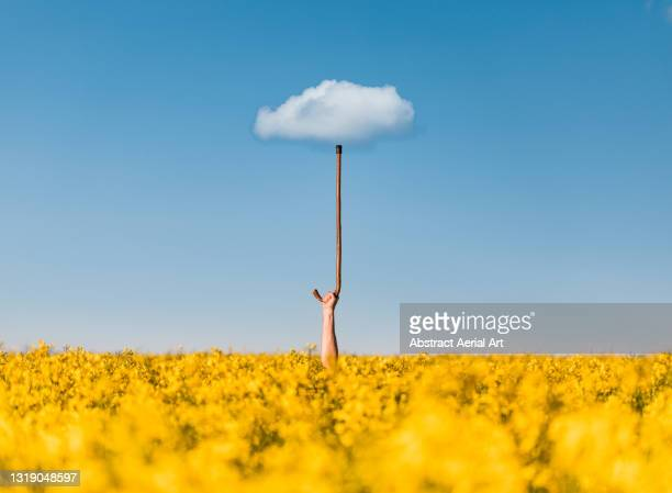 creative shot showing an umbrella illusion using an arm sticking out of a rapeseed oil field whilst holding a stick upwards and a cloud in the sky, england, united kingdom - crucifers stock pictures, royalty-free photos & images