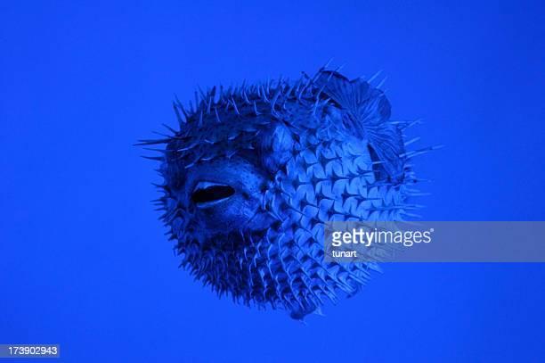 Creature Under Water