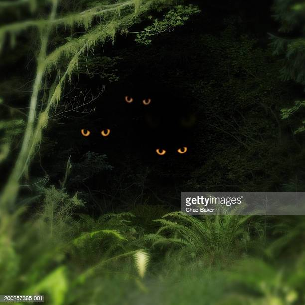 creatures peering out from forest, night (digital composite) - animal eye stock pictures, royalty-free photos & images