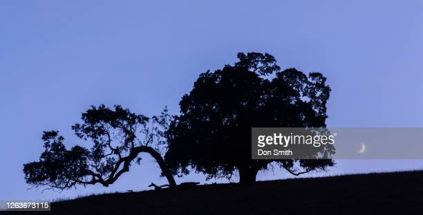 crecent moon and valley oaks - don smith stock pictures, royalty-free photos & images
