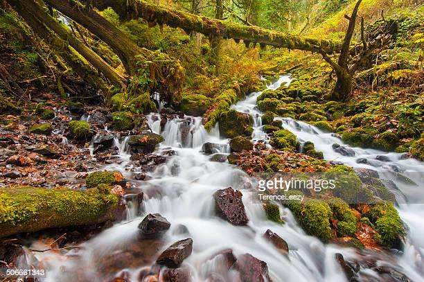 Creek along Columbia River Gorge